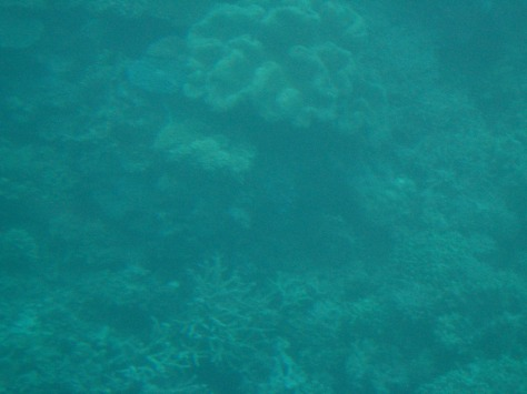 Coral varieties: top left-center: flat discs; top center: Wavy solid; bottom: antler branches-like. View from the Quicksilver semi-submersible at Agincourt Reef, at the edge of the continental shelf.