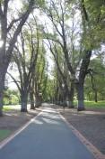 Lovely Lane in Fitzroy Park