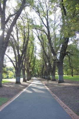Lovely Lane in Fitzroy Park