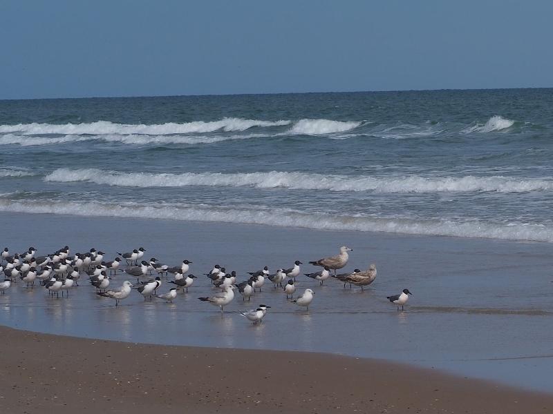 Birds Flock