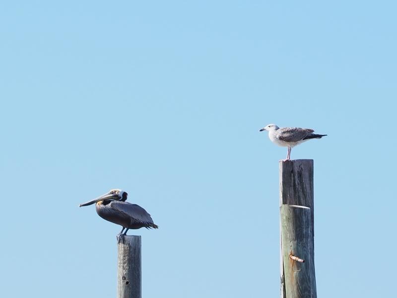 Birds Separate