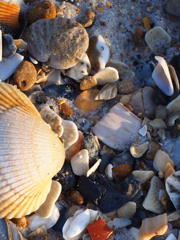 Alt: Shells aglow detail 1